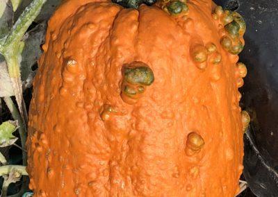 Goosebump Pumpkin